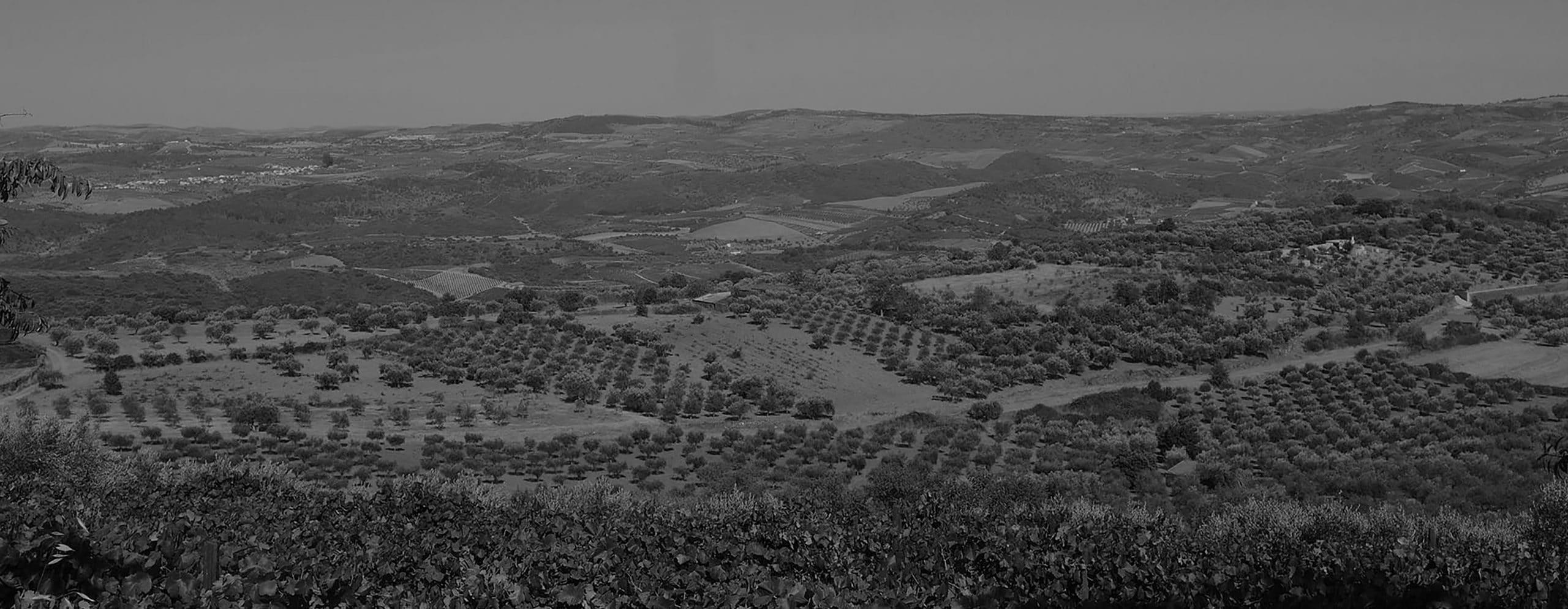 Vale Douro - Vue depuis la vigne