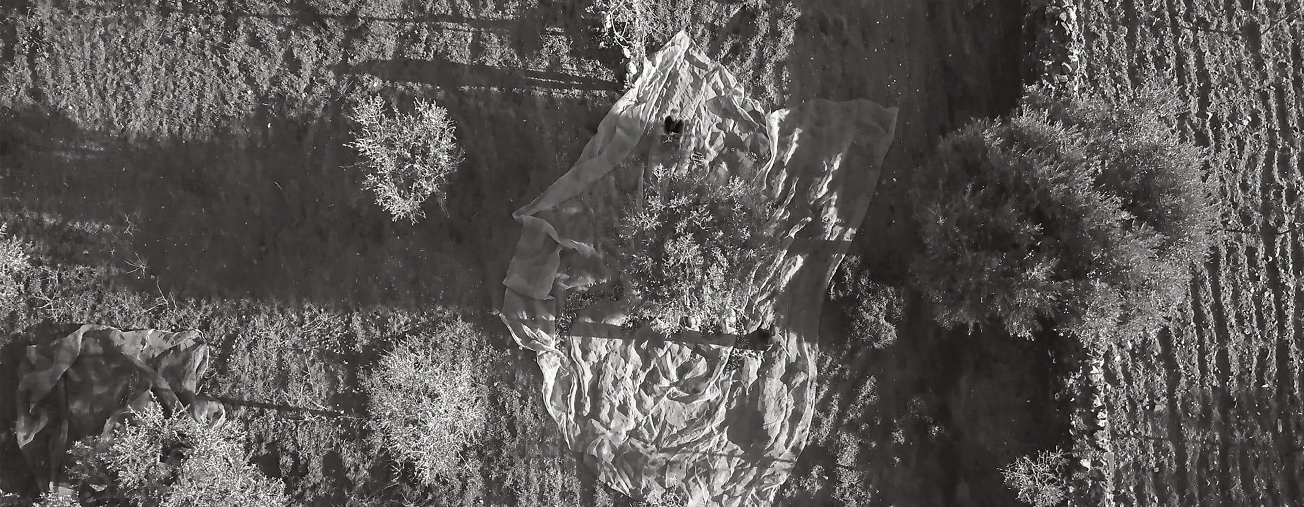 Vale DOURO - La cueillette à la baguette
